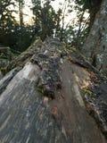 Σπασμένα ξύλα Στοκ Φωτογραφία