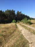 Σπασμένη οδός στο δάσος Στοκ Εικόνα