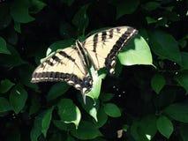 Σπασμένη πεταλούδα που παίρνει στον ήλιο στοκ φωτογραφίες