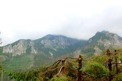 Σπασμένοι κορμοί των δέντρων σε ένα δάσος βουνών στοκ εικόνα