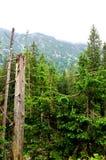 Σπασμένοι κορμοί των δέντρων σε ένα δάσος βουνών στοκ εικόνες