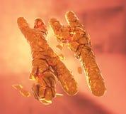 Σπασμένος ή τα πορτοκαλί χρωμοσώματα Χ και Υ διανυσματική απεικόνιση