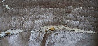 Σπασμένος καναπές, κανένας απών, κάθισμα ή ύπνος στοκ φωτογραφία