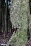 σπασμένος κορμός δέντρων Στοκ Φωτογραφίες