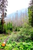 Σπασμένο δέντρο σε ένα μυστήριο ξέφωτο βουνών στοκ εικόνες