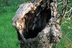Σπασμένο δέντρο της Apple Στοκ φωτογραφίες με δικαίωμα ελεύθερης χρήσης