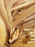 σπασμένο δέντρο στοκ εικόνα