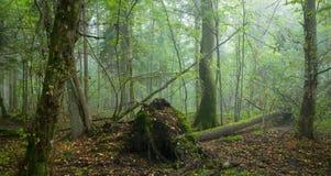 σπασμένο ανασκόπηση misty δέντρ&om Στοκ Εικόνες