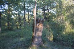 Σπασμένο δέντρο μετά από την αστραπή Έννοια της ζωής και του θανάτου - χτυπημένο αστραπή παλαιό δέντρο Στοκ Εικόνα