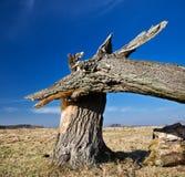σπασμένο δέντρο στοκ φωτογραφία