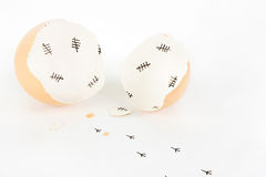 Σπασμένο κοχύλι αυγών με τα σημάδια ελέγχου εσωτερικά και τα ίχνη νεοσσών Στοκ Φωτογραφία