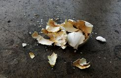 Σπασμένο κοχύλι αυγών περιστεριών στοκ φωτογραφία