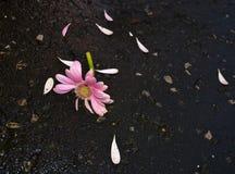 Σπασμένο λουλούδι Στοκ Εικόνες