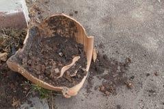Σπασμένο δοχείο λουλουδιών Στοκ Φωτογραφίες