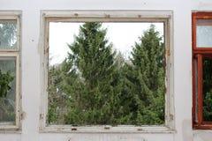 Σπασμένο πλαίσιο παραθύρων με τα δέντρα ελλείποντος γυαλιού και πεύκων στο υπόβαθρο Στοκ φωτογραφίες με δικαίωμα ελεύθερης χρήσης