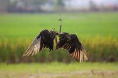 Σπασμένο φτερό στοκ εικόνα με δικαίωμα ελεύθερης χρήσης