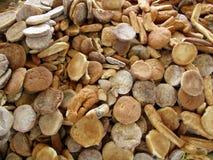 Σπαταλημένο ξηρό ψωμί Στοκ Φωτογραφία