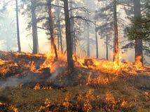 σπείρα πυρκαγιάς Στοκ φωτογραφίες με δικαίωμα ελεύθερης χρήσης