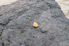 Σπειροειδές κοχύλι στο βράχο στοκ εικόνα