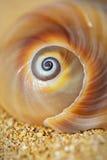 Σπειροειδές θαλασσινό κοχύλι στοκ εικόνες