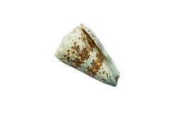 Σπειροειδές ριγωτό θαλασσινό κοχύλι που απομονώνεται στο άσπρο υπόβαθρο Στοκ Φωτογραφίες