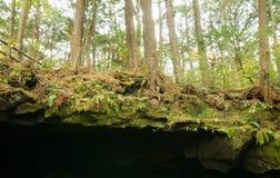 Σπηλιά στην Ιαπωνία Στοκ φωτογραφίες με δικαίωμα ελεύθερης χρήσης