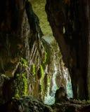Σπηλιά στο εθνικό πάρκο niah Στοκ Εικόνες