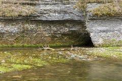 Σπηλιά την άνοιξη Στοκ εικόνες με δικαίωμα ελεύθερης χρήσης