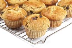 Σπιτικά Muffins τσιπ σοκολάτας μπανανών Στοκ εικόνα με δικαίωμα ελεύθερης χρήσης