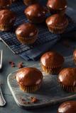 Σπιτική σκοτεινή σοκολάτα Cupcakes Στοκ Εικόνες