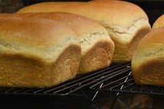 Σπιτικό φρέσκο ψωμί Στοκ εικόνα με δικαίωμα ελεύθερης χρήσης