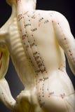 σπονδυλική στήλη κουκλών acupuncturists Στοκ Φωτογραφία