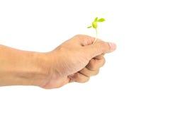 Σπορά εκμετάλλευσης χεριών Στοκ φωτογραφία με δικαίωμα ελεύθερης χρήσης