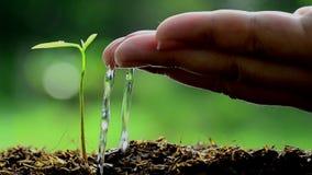 Σπορά, σπορόφυτο, αρσενικό χέρι που ποτίζει το νέο δέντρο φιλμ μικρού μήκους