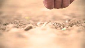 Σπορά χεριών της Farmer απόθεμα βίντεο