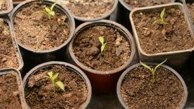 Σπορές στους καλλιεργητές φιλμ μικρού μήκους