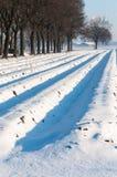 Σπορεία σπαραγγιού που καλύπτονται με το χιόνι Στοκ φωτογραφία με δικαίωμα ελεύθερης χρήσης
