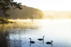 σπορείο ο ελαφρύς ύπνος πρωινού ατόμων του Στοκ φωτογραφίες με δικαίωμα ελεύθερης χρήσης