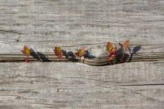 Σπορόφυτα δέντρων που μεγαλώνουν από το παλαιό ξύλο Στοκ Φωτογραφίες
