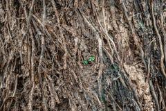 Σπορόφυτα δέντρων Στοκ φωτογραφία με δικαίωμα ελεύθερης χρήσης