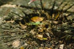 Σπορόφυτα στον κύβο δέντρων στη φύση στοκ εικόνα
