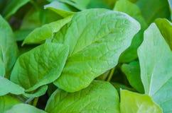 Σπορόφυτα των φυτικών κολοκυθιών Στοκ φωτογραφίες με δικαίωμα ελεύθερης χρήσης