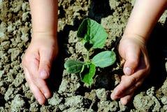 σπορόφυτο φυτών κατσικιών Στοκ φωτογραφία με δικαίωμα ελεύθερης χρήσης