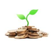 Σπορόφυτο χρημάτων Στοκ Φωτογραφία