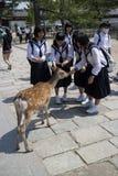Σπουδαστές σε ομοιόμορφο ταΐζοντας τα ελάφια στο ναό Todai-todai-ji Στοκ Εικόνες