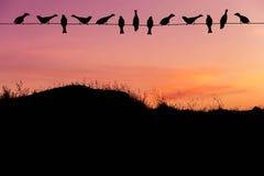 Σπουργίτια κοπαδιών σκιαγραφιών που σκαρφαλώνουν στο ηλεκτροφόρο καλώδιο στο ηλιοβασίλεμα στοκ εικόνες