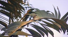 Σπουργίτι δέντρων κατάψυξης στοκ φωτογραφίες με δικαίωμα ελεύθερης χρήσης