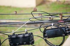Σπουργίτι πουλιών στη θέση φύσης Στοκ Φωτογραφίες