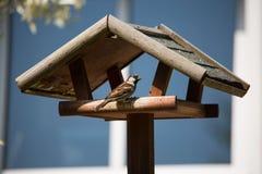 Σπουργίτι σπιτιών πουλιών στον κήπο Στοκ Εικόνα