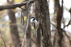 Σπουργίτι σπιτιών πουλιών Στοκ εικόνες με δικαίωμα ελεύθερης χρήσης
